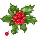 Weihnachten-Stechpalme-Ilex isoliert auf weißem Hintergrund — Stockfoto #17184277