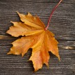 Autumn leaf on old wooden board desk — Stock Photo #17184005