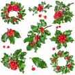 Collection Christmas decoration of European holly ilex isolated on white background — 图库照片