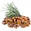 Cedar pine nuts and oil capsule — Stock Photo