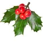 Christmas holly Ilex isolated on white background — Stock Photo #17184441