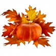 Pumpkin with Colorful autumn leaves red oak — Stock Photo