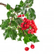Sprig of European holly ilex christmas decoration — Stok fotoğraf