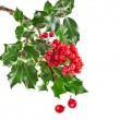 Sprig of European holly ilex christmas decoration — Stock fotografie