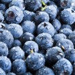 Sweet fresh blueberry - Stock Photo
