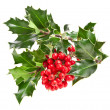Sprig of European holly ilex christmas decoration — Stockfoto