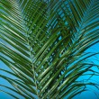 Stock Photo: Palm branches on the blue background