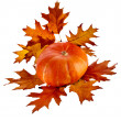 Pumpkin with Colorful autumn leaves red oak — Stock Photo #17185607