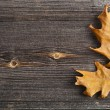 Autumn Leaves over wooden board background with copy space — Stock Photo #17185951
