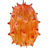 Kiwano fruit — 图库照片
