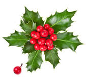Christmas holly Ilex isolated on white background — Stock Photo