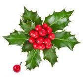 Christmas holly Ilex isolated on white background — Stock Photo