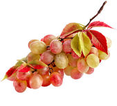 Fresh grape fruits with leaves isolated on white background — Stock Photo