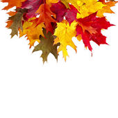 Border of colored falling leafs quercus rubra on white background — Stock Photo