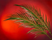 Palm branches on the red color background — Stock Photo