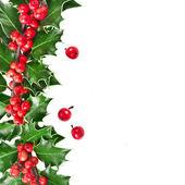 Christmas Border of holly Ilex isolated on white background — Stock Photo