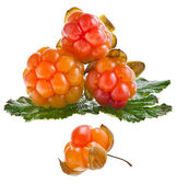 Fresh cloudberry ( Rubus chamaemorus) — Foto de Stock