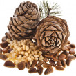 Cedar pine cones with nuts isolated on white background — Stock Photo #21188855