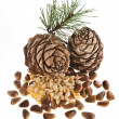 Cedar pine cones with nuts isolated on white background — Stock Photo #21189099