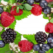 Border frame made of different forest berries with flower isolated on a white background — Stock Photo