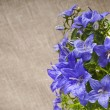 Bunch of blue color campanula flowers on canvas texture with copyspace — Lizenzfreies Foto