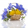Campanulblue flower in basket isolated on white background — Stock Photo #21189993