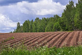 Agricultural fields background — Stock Photo