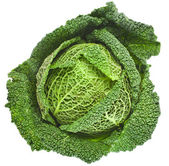 Savoy Cabbage head Isolated on White Background — Stock Photo
