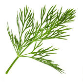Dill herb isolated on white background — Stock fotografie
