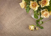 Bouquet of cream tea roses on canvas cloth texture with copy space for text — Stock Photo
