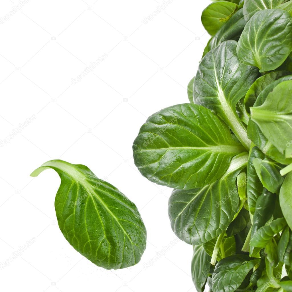 Pak Choi Leaves Leaves Spinach or Pak Choi