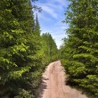 Stock Photo: Scenic way road in green coniferous forest