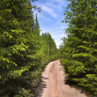 Scenic way road in green coniferous forest — Stock Photo #21190129
