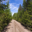Scenic way road in green coniferous forest - Stockfoto