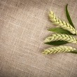 Wheat ears on sack texture background - Photo