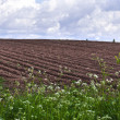 Agricultural fields background — Photo