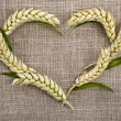 Heart symbol of wheat ears on beige canvas texture background — Stok fotoğraf