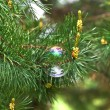 Branch of wet pine needles and colorful bubble - Stock Photo