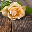 One tender cream rose close up in the vintage grunge wooden board texture — Stock Photo