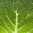 Savoy Cabbage Leaf Texture Macro Background — Stock Photo