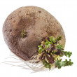 Potato sprouts isolated on white - Stok fotoraf