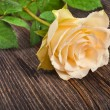 One tender cream rose close up in the vintage grunge wooden board texture - Foto Stock
