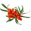 Sea buckthorn berries isolated on the white — Stock Photo #21191089