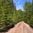 Royalty-Free Stock Photo: Scenic way road in green coniferous forest