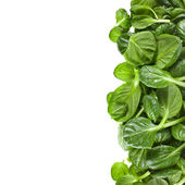 Fresh green leaves spinach or pak choi isolated on a white background — Stock Photo