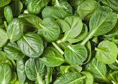 čerstvé zelené listy špenátu nebo pak choi — Stock fotografie
