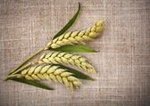Wheat ears on sack texture background — Stock Photo