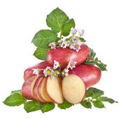 Red potato with leaves isolated on white — Stock Photo