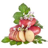 Czerwone ziemniaki z liści na białym tle — Zdjęcie stockowe
