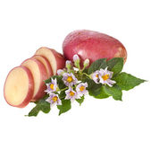 Fresh potatoes with leaves and flowers — Stock Photo